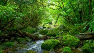 シンフォニエッタ響きの森祈りの鐘第1番